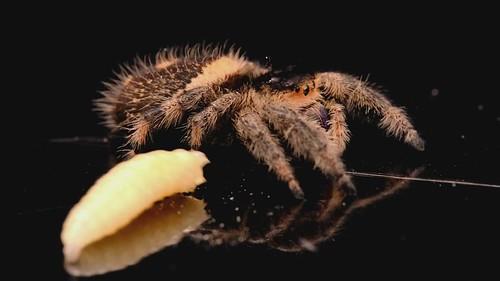 Flickriver: Pet bugs pool