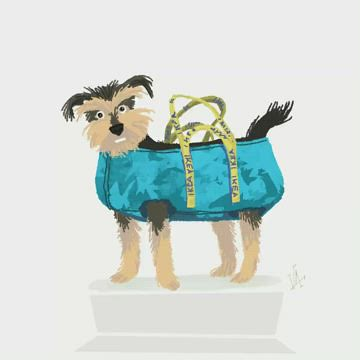 Gus in a shopping bag, animated