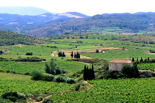 The wine country of the Corbières