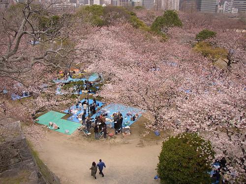 sakura parties below