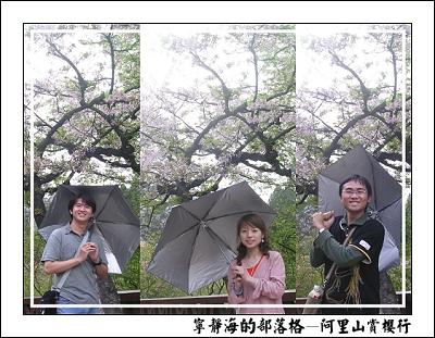 阿里山賞櫻行_櫻花狂想曲