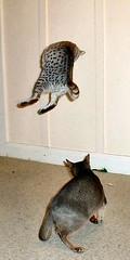 Jump, Kitty