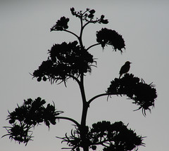 Bird Silouette Small
