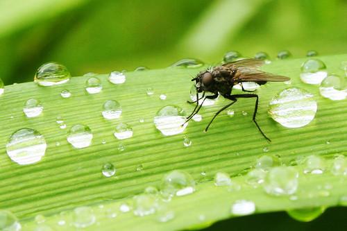 RainFly