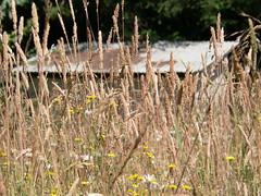 Shed in field