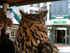 The Owl Hates Me