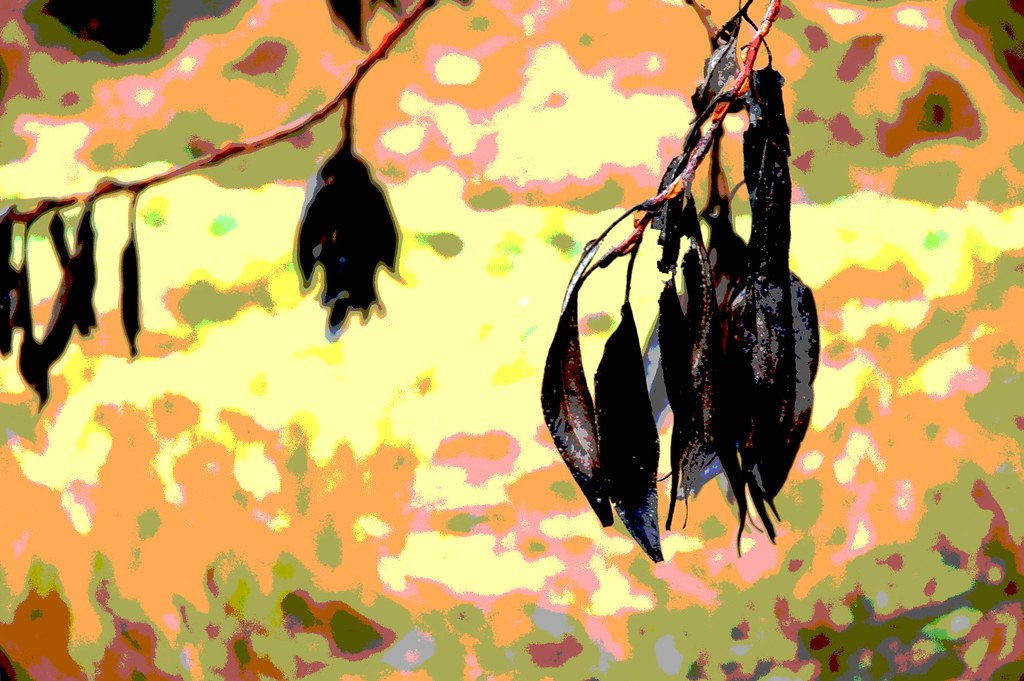 posterized seed pods