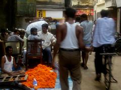 Marigolds, Bombay