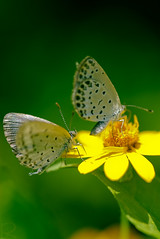 Butterfly #2 photo by rika...