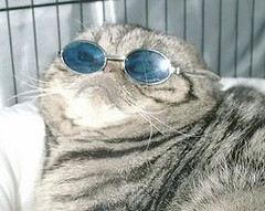 cats%20in%20sunglasses%20ari