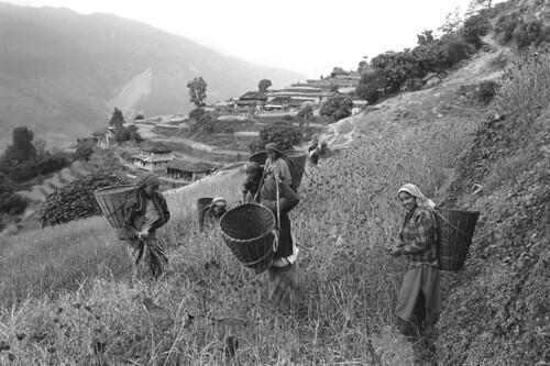 Nepal, at a glance
