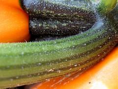 Gold Rush Zucchini Texture