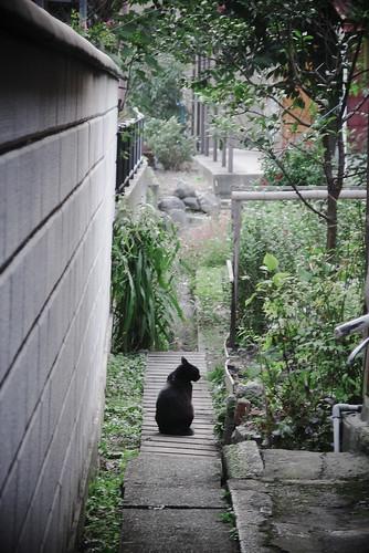 猫の居る小径