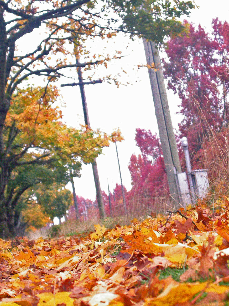 autumn in Kerrisdale