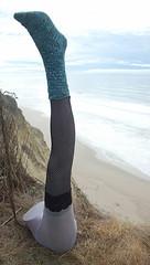 Pomatomus + Leg