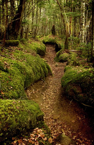 Alps Path