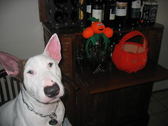 Scuba and Haloween 002