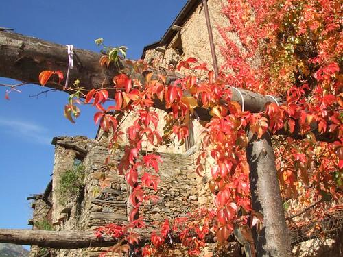 Lisson automne vigne vierge sur pergola - Lisson Herbstfarben wilder Wein