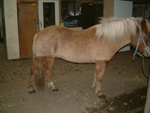 borst scheren paard