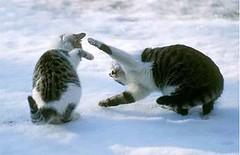 cat_play