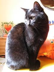 Minka (†14.08.2006)
