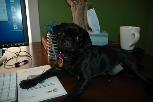 Thatcher on my desk