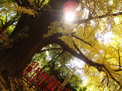 鬼子母神〜護国寺20061203 034