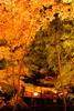 シリーズ「紅葉」-第5夜-晩秋の煌めき