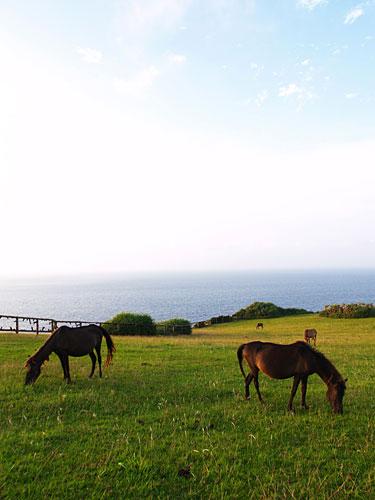与那国の馬