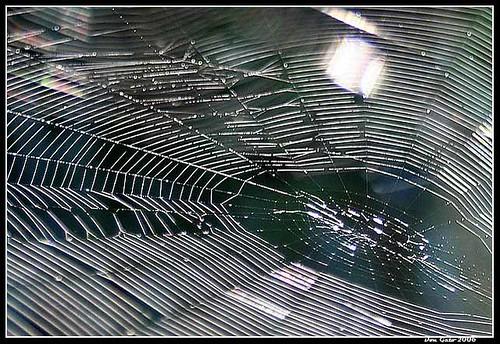 la tela de la araña