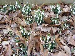 backyard flowers in march 004