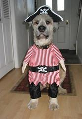 arrr, doggie!