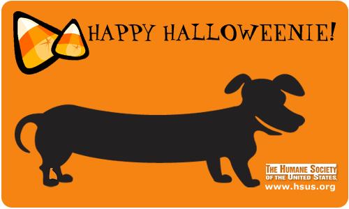 HSUS Halloweenie eCard