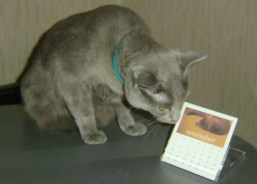 Megumi admires her Smoggy calendar