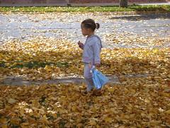 Fall Leaves, Fall