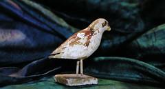 carvebird