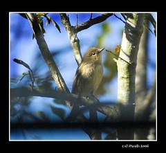 Little Birdy!