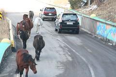 2006-11-18_15-41-18_Schymbulak_Almaty_Kazakhstan