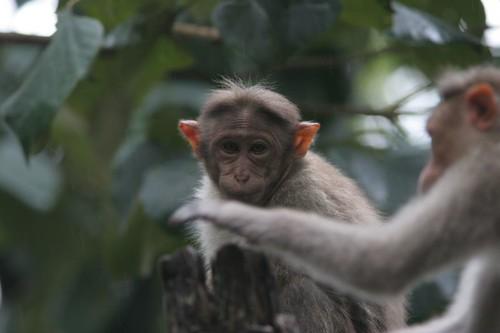 IMG_0060 Kalyan's Macaques
