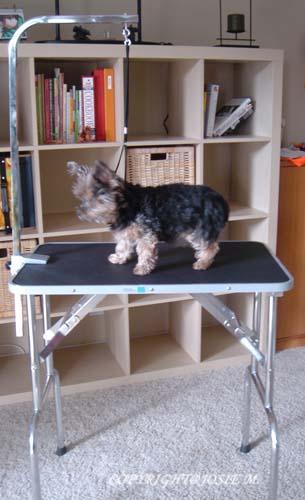 grooming table 2
