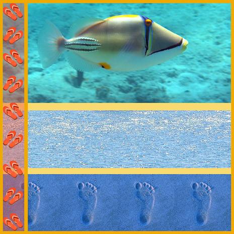 water_picassofish