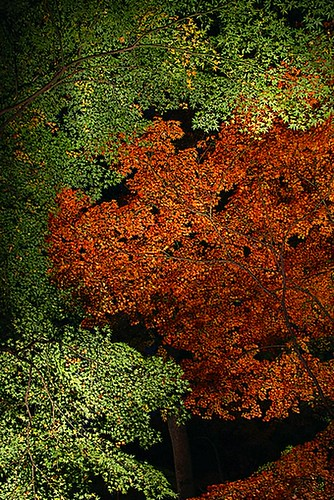 nocturnal view of autumn colour