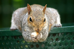 Cape Town Squirrel photo by Johan Lindstrom