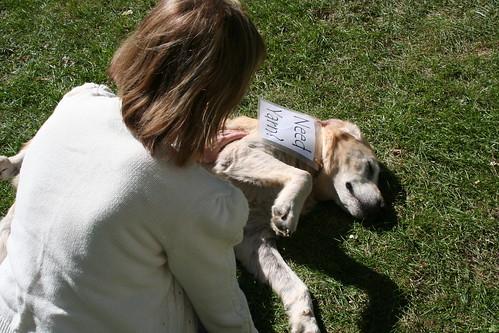 The Yarn Dog at Dancing Leaf Farm