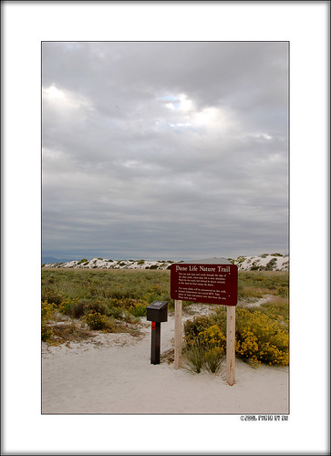 White Sands Dune Life Nature Trail sign