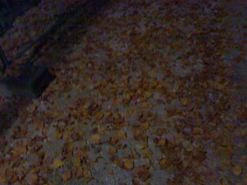 Herbstlaub. Als ob man auf kartoffelchips rumsteigt.