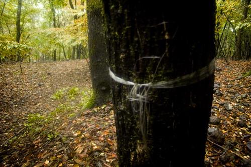 Clear Plastic Trail Marker