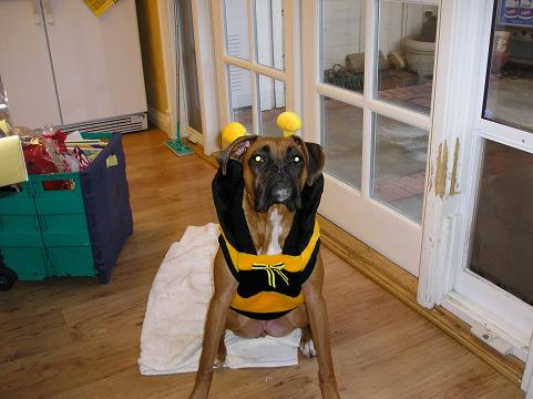 cairo the bee