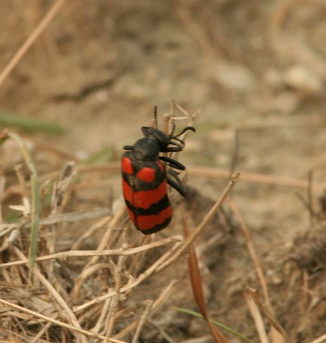 IMG_0207 Un id Bug