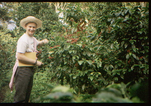 Chris Kenny picking coffee, Nicaragua, 1989